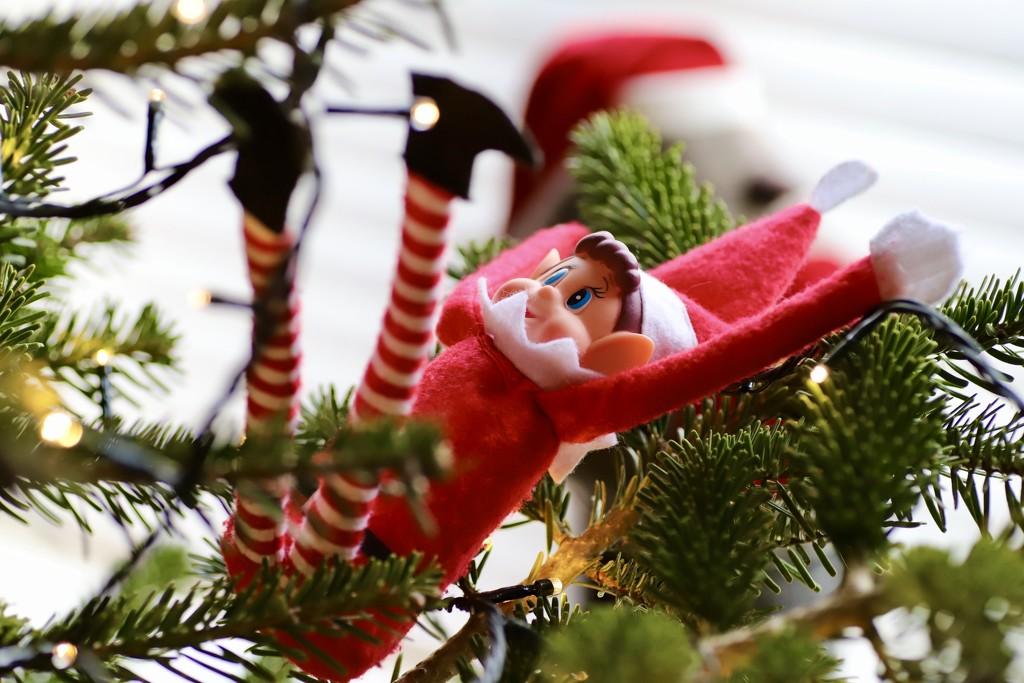 Naughty Elf Shenanigans! by carole_sandford