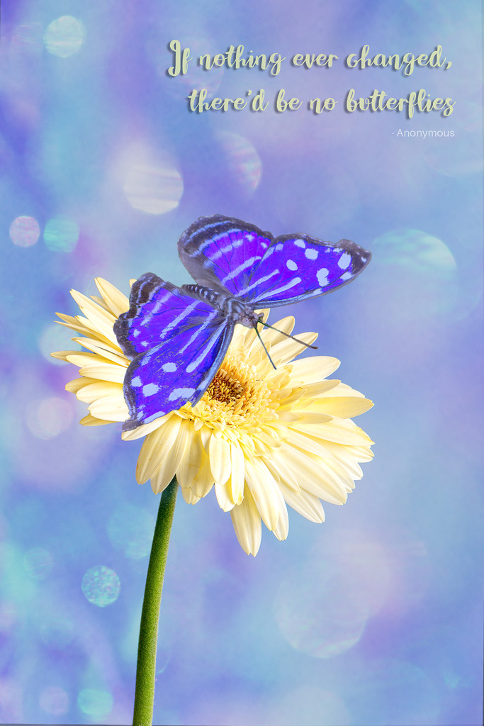 Butterfly Composite by yorkshirekiwi