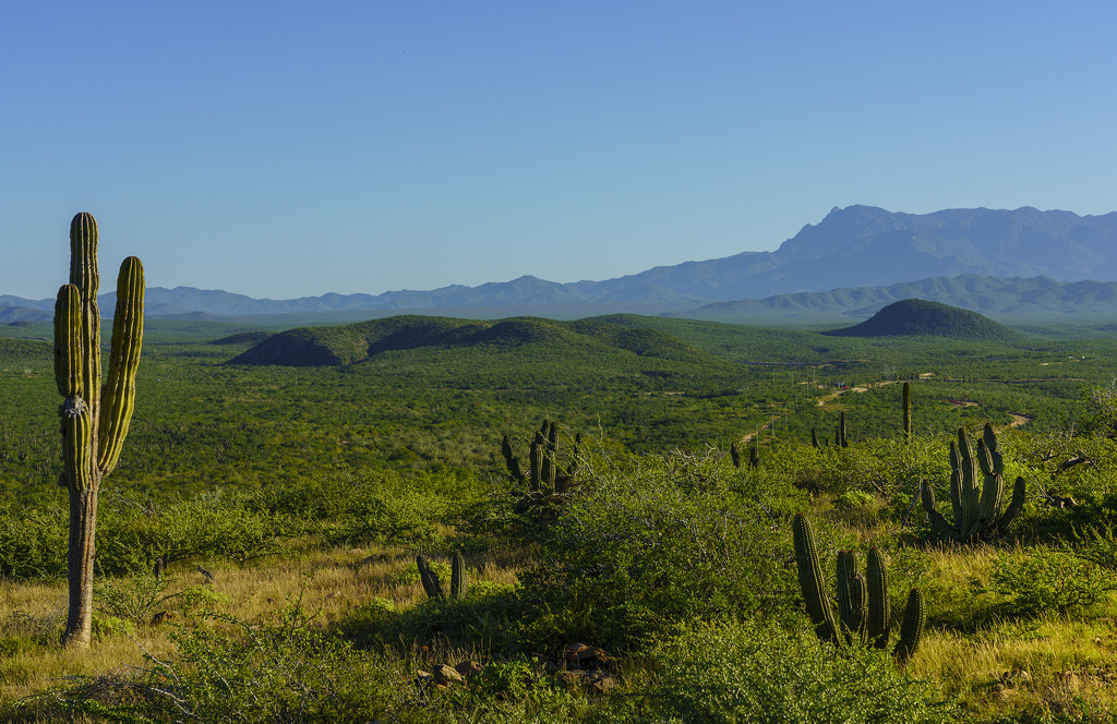 Saguaro and Mountains  by jgpittenger