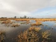 8th Dec 2019 - Windy wetlands