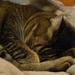 cosy nap