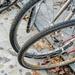 Wagtail in the bike wheels