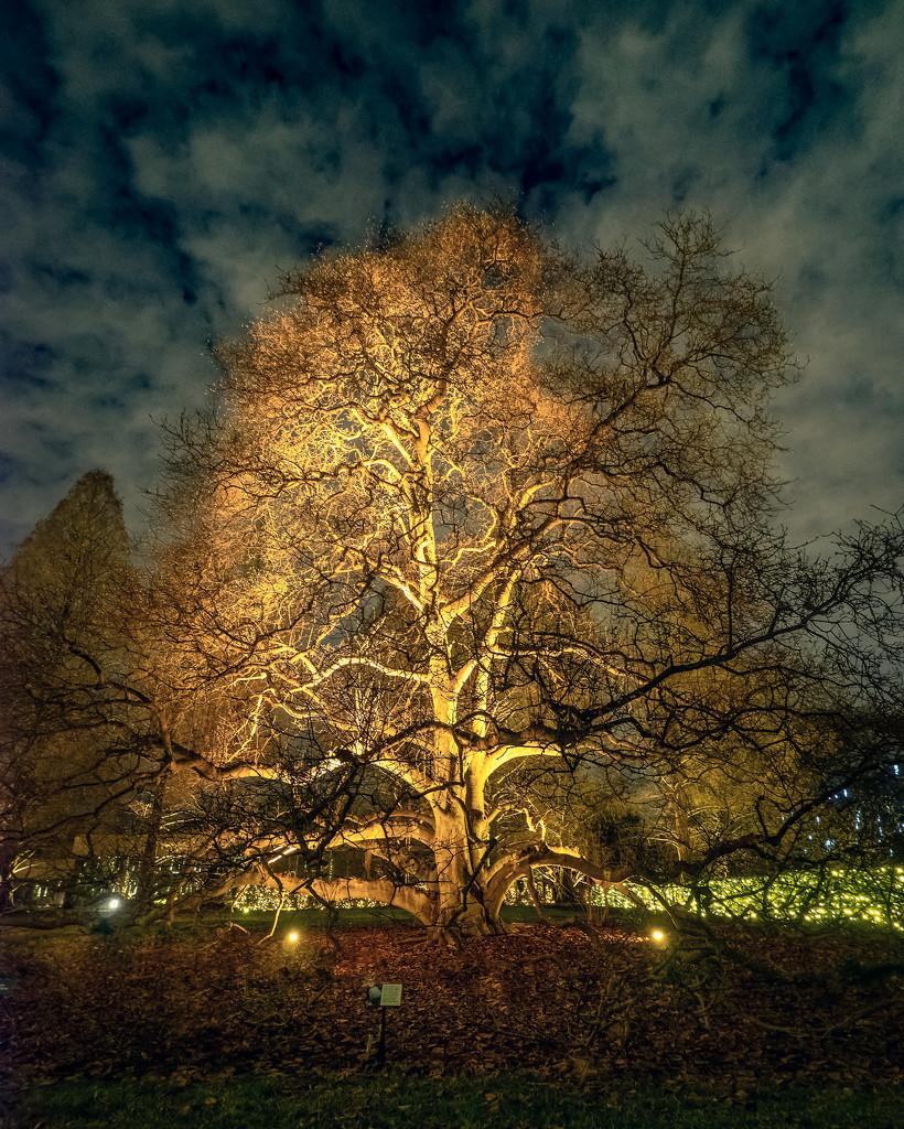 Illuminated Tree by rosiekerr