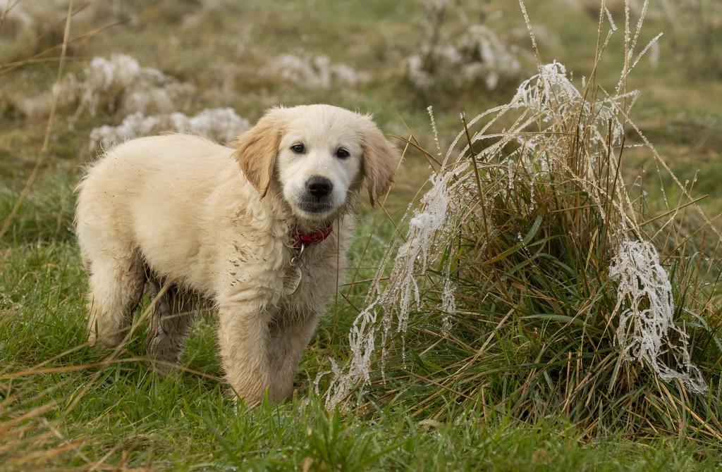 ellie in the frost  by shepherdmanswife