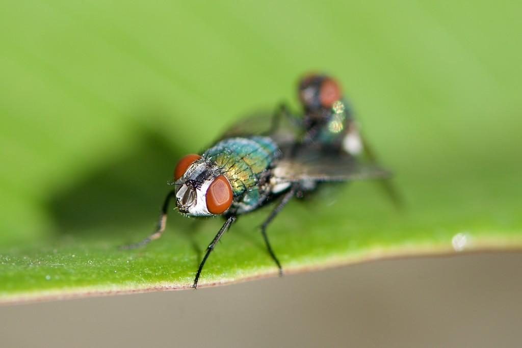Making More Horrible Flies For Summer_DSC9198 by merrelyn