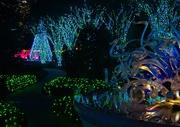 9th Dec 2019 - LHG_0024- Garden Lights at Night