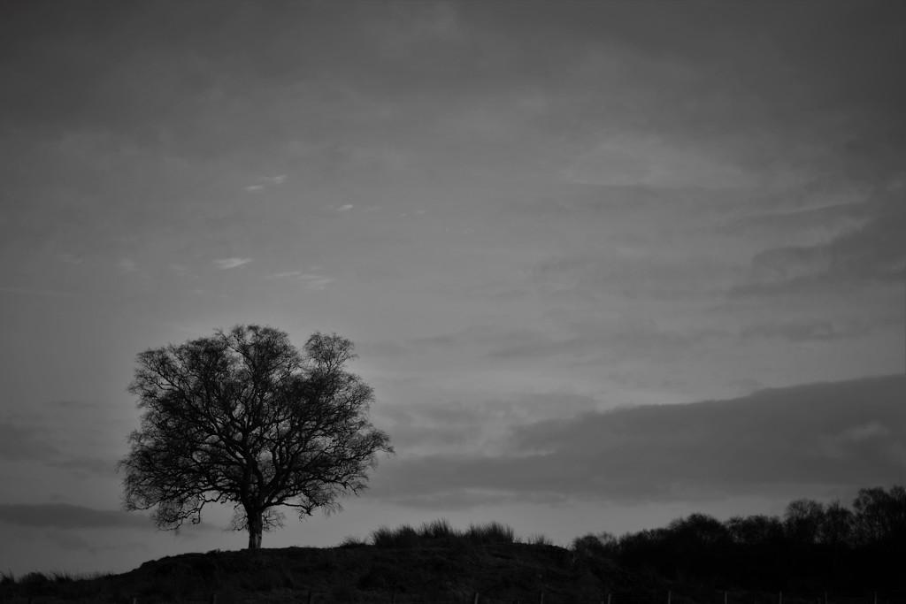tree by christophercox
