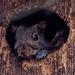 squirrel in a birdbox