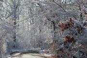 9th Dec 2019 - Snowy Trail