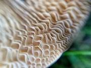 10th Dec 2019 - Mushroom macro.