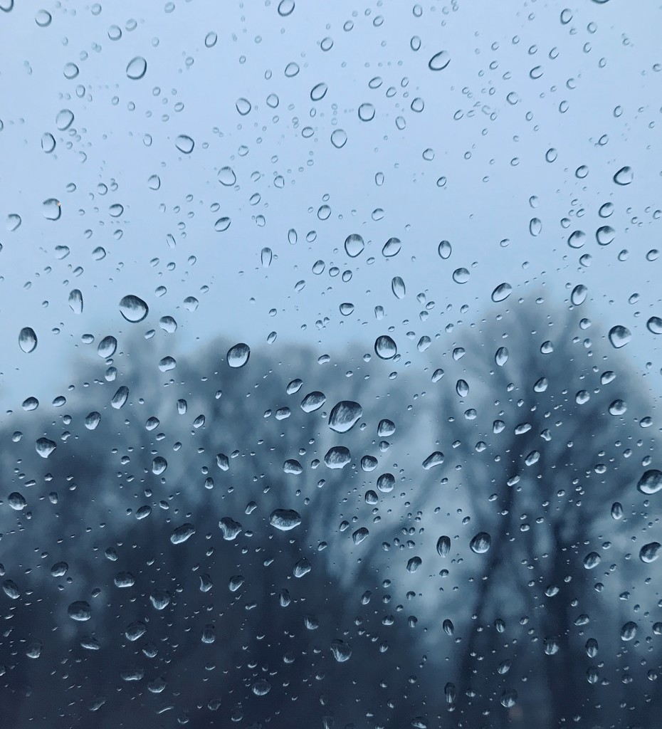 Day 343:  Rainy Days And Mondays  by sheilalorson