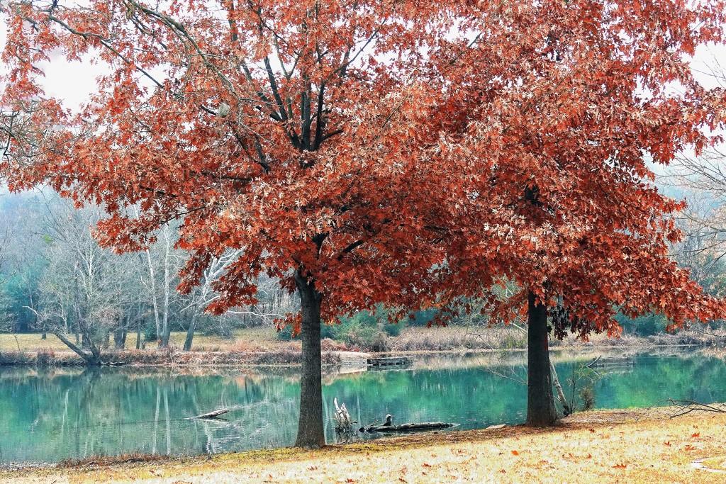 Winter Approaches Arkansas by milaniet