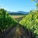 Alto wines