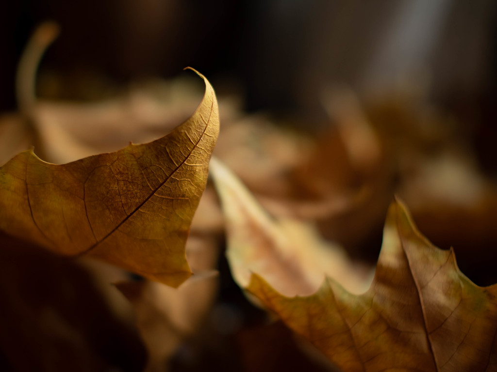 And here is still warm autumn by haskar
