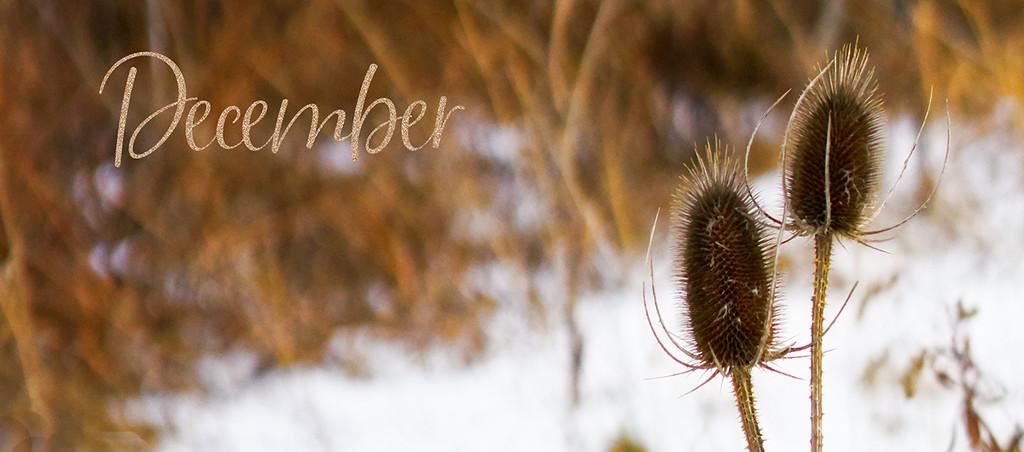 December by gardencat