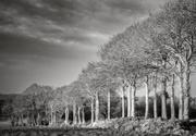 10th Dec 2019 - Tree Lined Field Border...