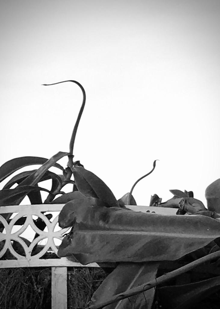 Nessie  by photohoot