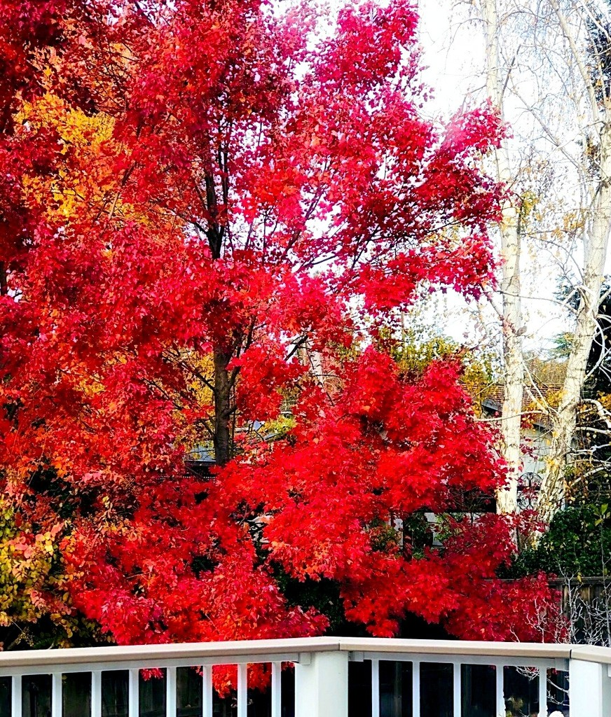 Just Like Red Leaves by gardenfolk