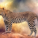 Leopard by ludwigsdiana