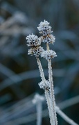 1st Dec 2019 - Ice