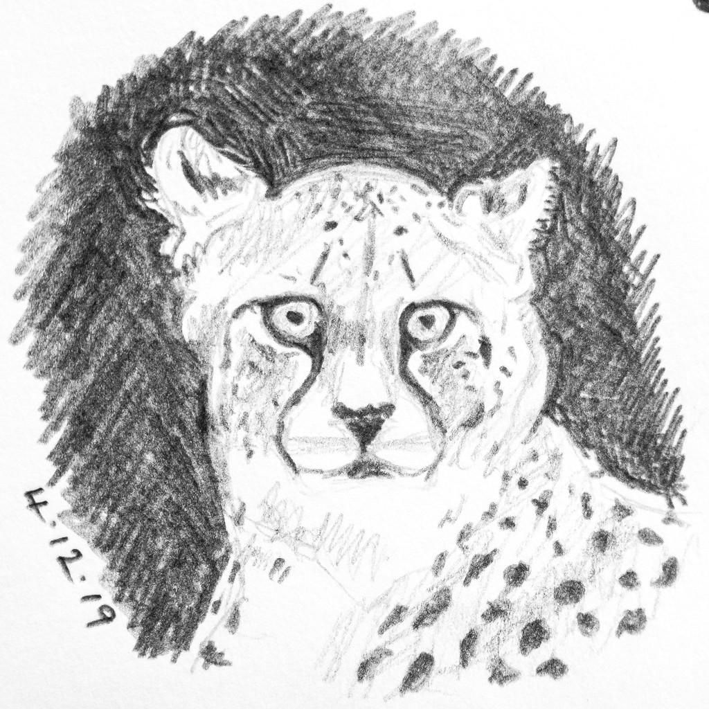 Cheetah by harveyzone