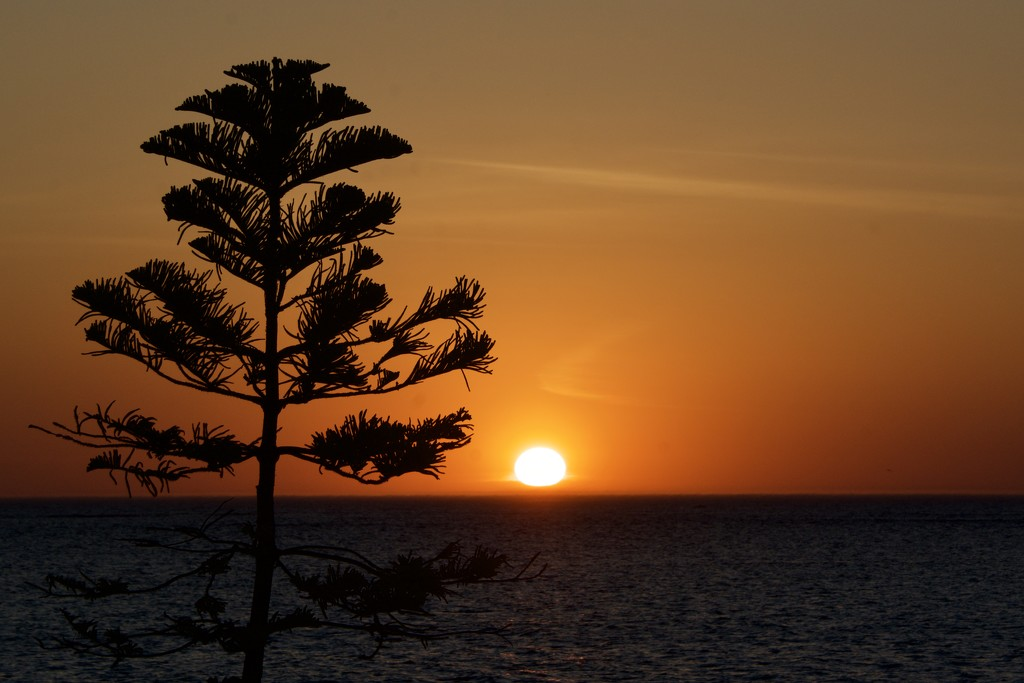 Sunset Silhouettes_DSC9282 by merrelyn