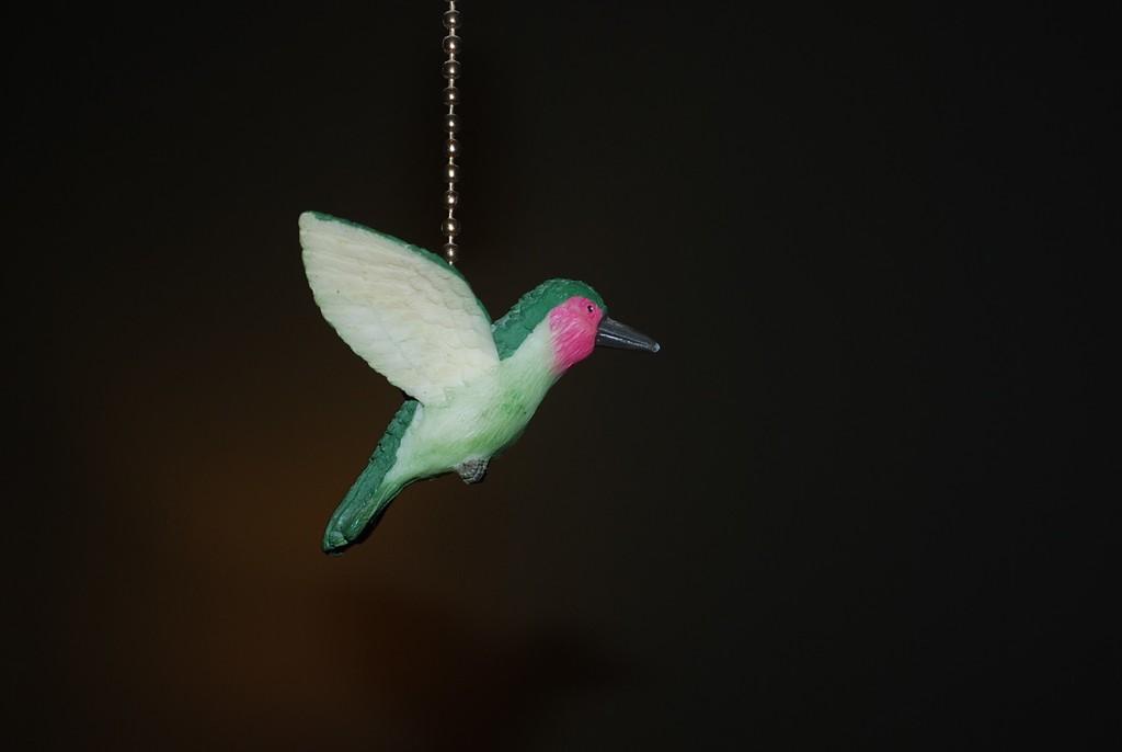hummingbird by stillmoments33