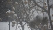 11th Dec 2019 - Fresh Snow