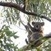 casual by koalagardens