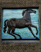 9th Dec 2019 - Return of the black horse