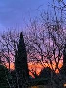 12th Dec 2019 - Sunrise in my garden.