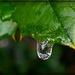 Green by olivetreeann