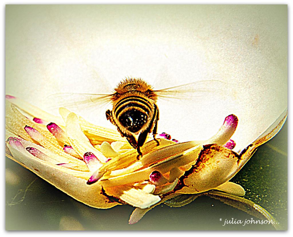 Bee Behind.... by julzmaioro