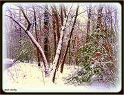 11th Dec 2019 - Snow Day 2