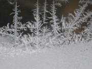 12th Dec 2019 - forest of frost