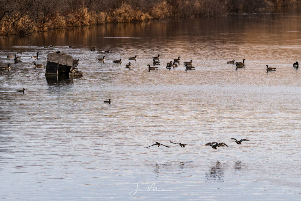 Wildlife at the Lake by jae_at_wits_end