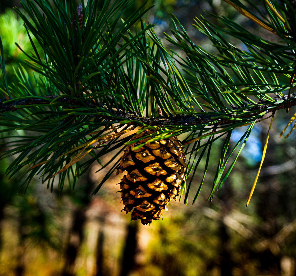 Nature's Christmas Ornament by randystreat
