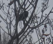 12th Dec 2019 - Bird in a Bush