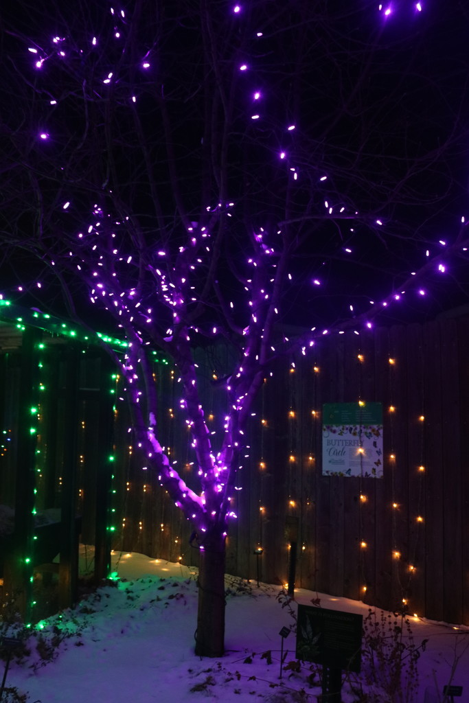 Winter Nights Winter Lights 6 by ladykassy46