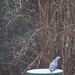Winter Bird Bath