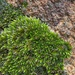 Tiny patch of moss