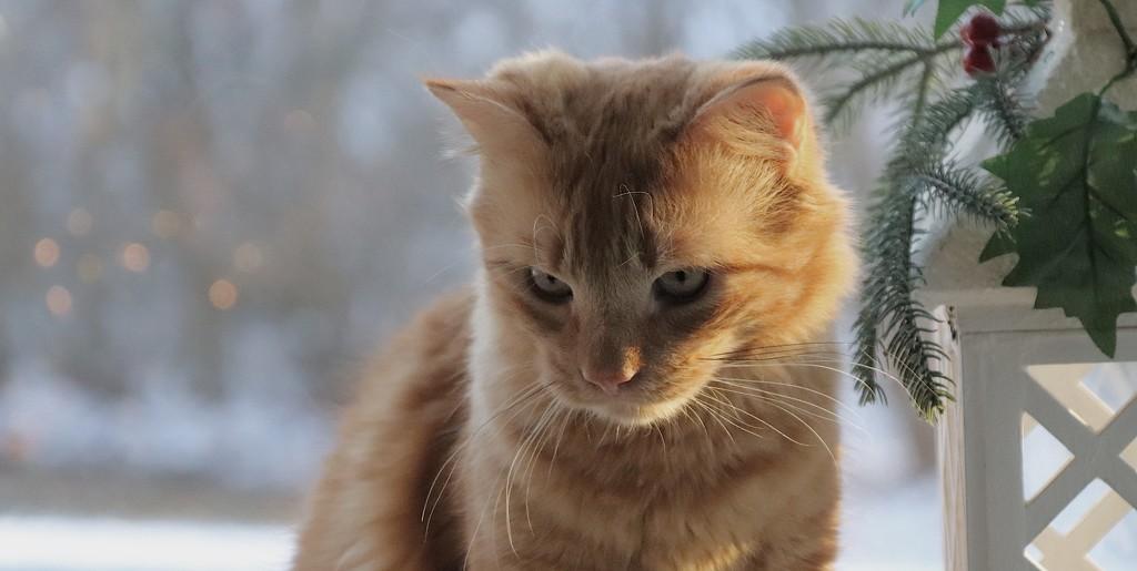 Day 347:  Pensive Dwight by sheilalorson