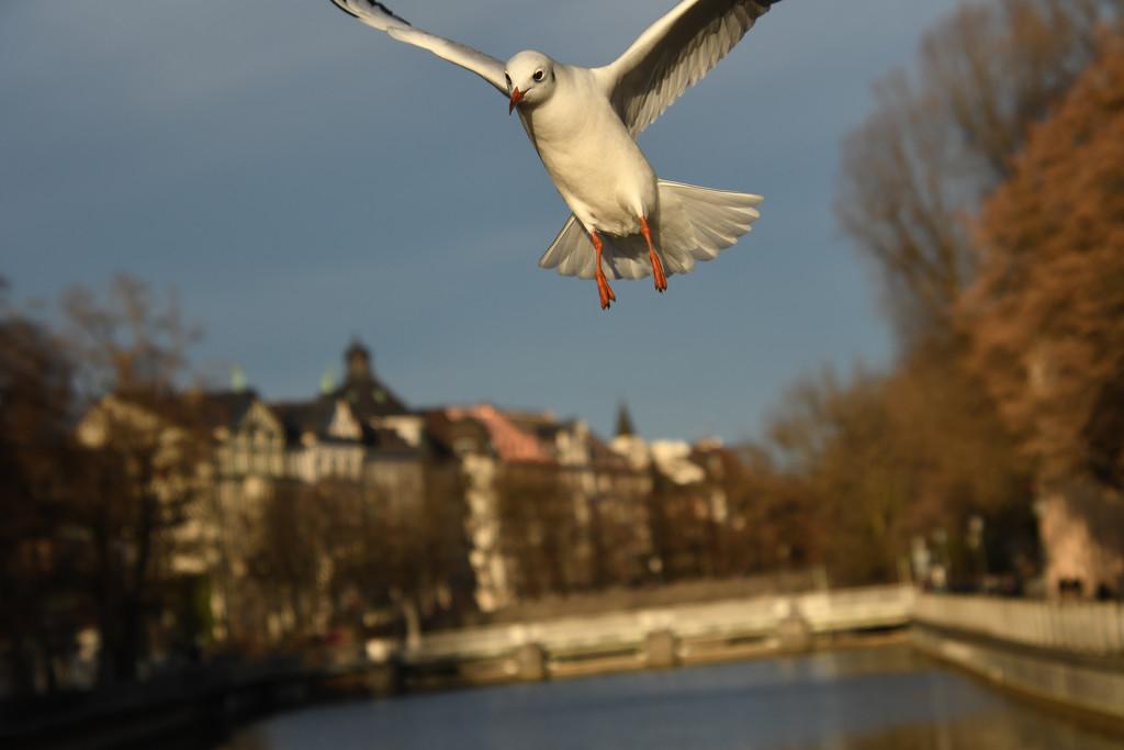 Flight over Munich by kareenking