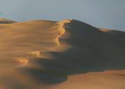 14th Dec 2019 - Dunes Close Up