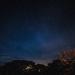Night Moves by backyardbirdnerd
