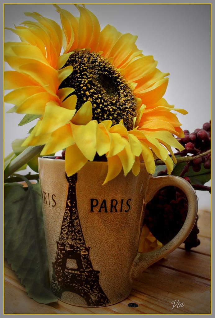 Coffee in Paris  (Best on black) by sdutoit