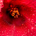 Macro of the Flower After the Rain!