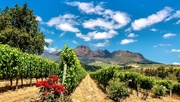 15th Dec 2019 - A view of the Helderberg