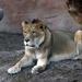 Zenda The King Of The Jungle