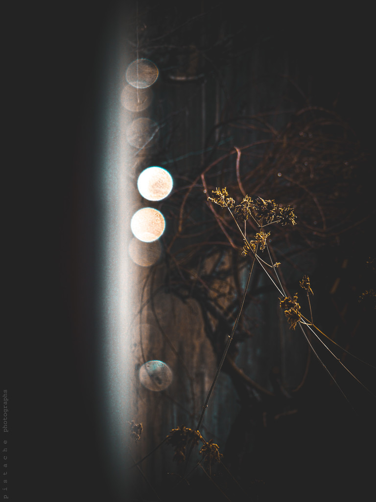 into the light by pistache
